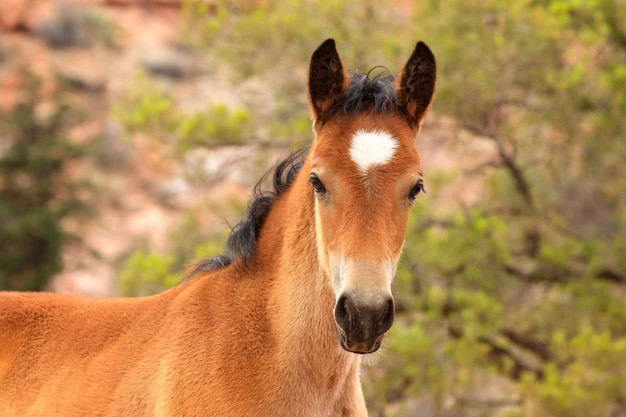 Cute utah ranch foal