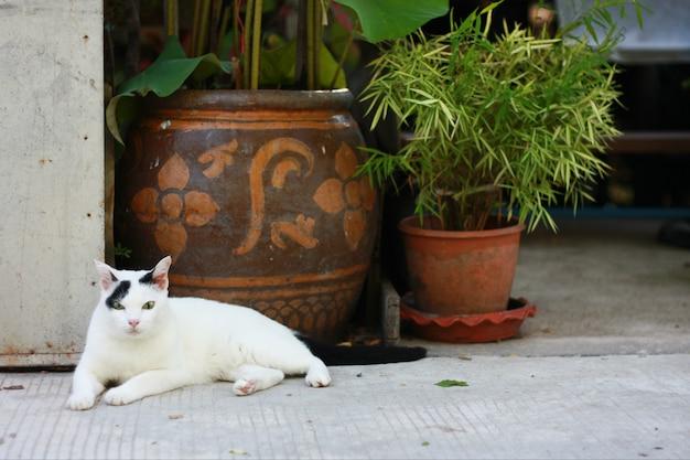 Симпатичные белый и черный кот сидят с зеленой травой в саду