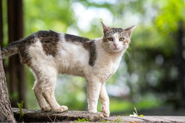 夏の通りに屋外に立っているかわいい白と灰色の猫。