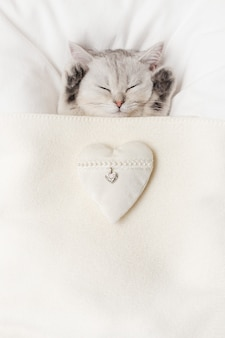 A cute white british kitten sleeps under a white knitted blanket, with a white textile heart