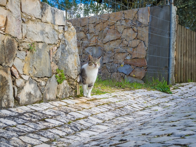 Cute white and brown domestic cat standing near a stone wall by a wired fence
