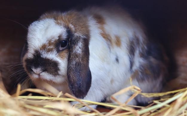わらの上のかわいい白茶色のウサギ