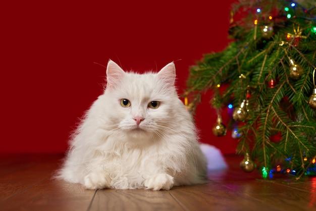 Милый белый кот лежит под елкой на красном фоне, фон для новогодней открытки
