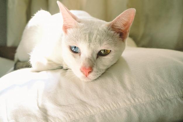 Милый белый кот с голубыми и желтыми глазами спит на подушке в спальне. идея домашней концепции. принять фон идеи животных