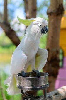 Милая белая птица какаду на фоне природы, концепция домашних животных