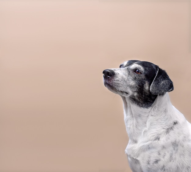 Cute white dog with black spots on light solid background
