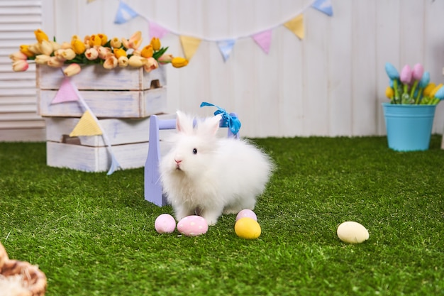 Cute white fluffy rabbit standing on a green lawn in an easter decoration.
