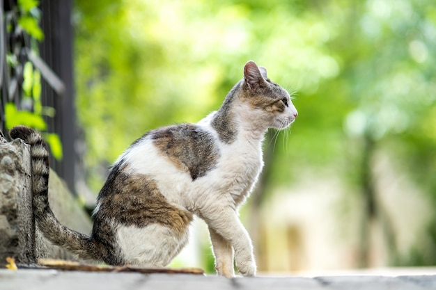 Cute white and gray cat sitting outdoors on summer street