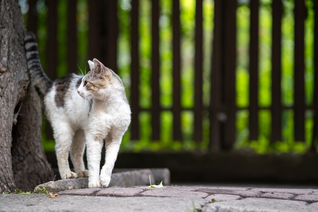 Cute white and gray cat standing outdoors on summer street.