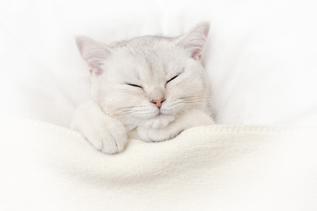 A cute white kitten sleeps on a white bed under a knitted blanket.
