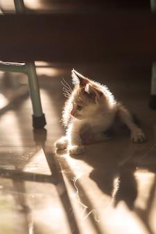 Милый белый котенок под стулом на утреннем солнце