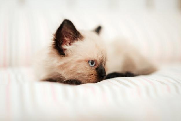 黒い耳を持つかわいい白い子猫は、眠ろうとしている間、白いベッドに寄り添います。孤立した猫のペット