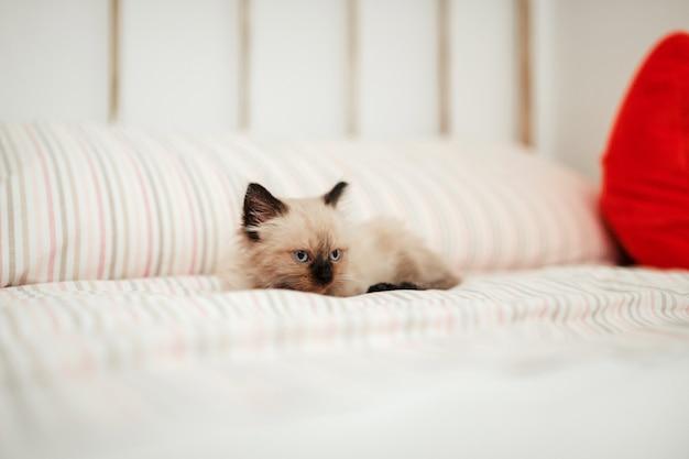 眠ろうとしている間、黒い耳を持つかわいい白い子猫は白いベッドに寄り添います