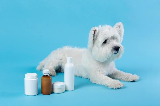 Simpatico cucciolo bianco isolato su blue