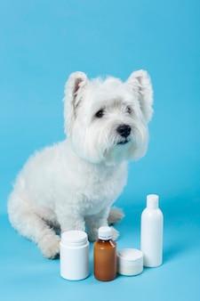 블루에 고립 된 귀여운 흰색 작은 강아지