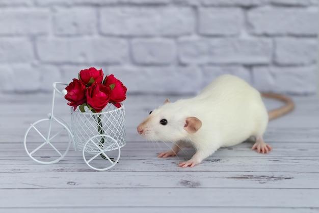かわいい白い小さなネズミは赤い花の花束の隣に座っています。