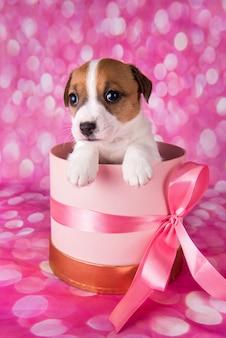 Милый белый щенок на розовой коробке с бантом.