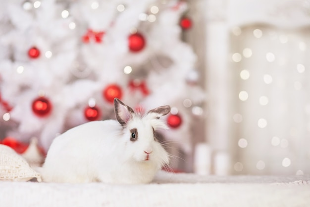 Cute white rabbit, bunny against background of festive decorated fir tree.  happy winter holidays concept