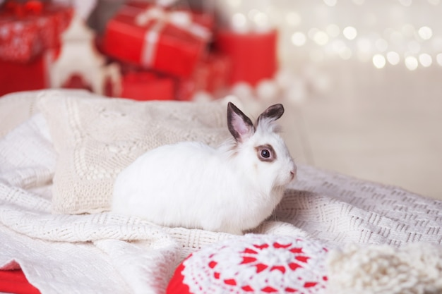 Cute white rabbit, bunny against with festive decorated fir tree.  happy winter holidays concept. red and white colors