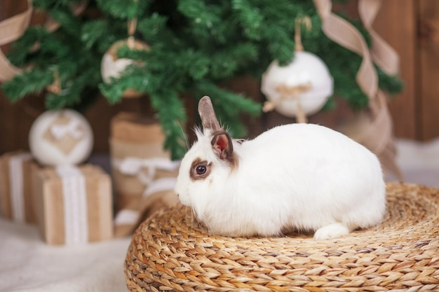 Cute white rabbit, bunny against with festive decorated fir tree.  happy winter holidays concept