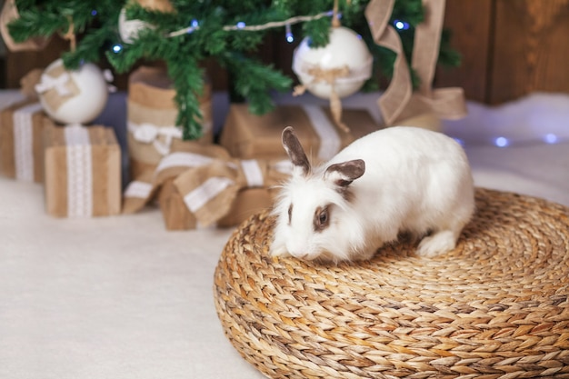 Cute white rabbit, bunny with festive decorated fir tree.  happy winter holidays concept. copy space