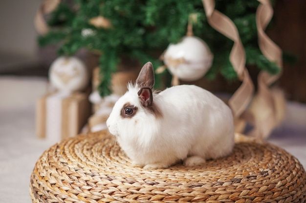 Cute white rabbit, bunny with festive decorated fir tree.  happy winter holidays concept