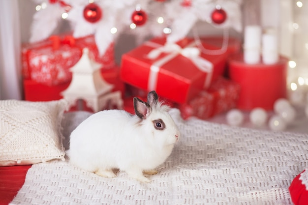Cute white rabbit with festive decorations