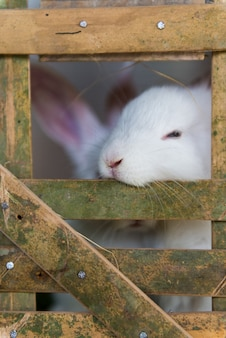 Cute white rabbits in cage