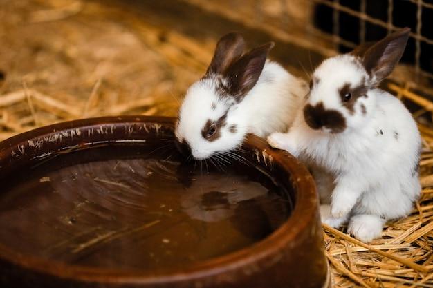 Симпатичные белые кролики возле воды