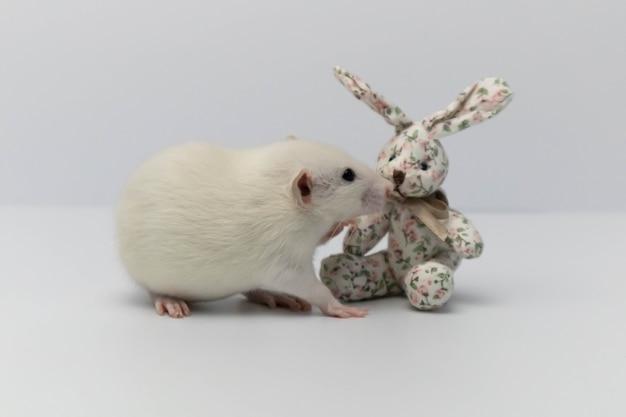 Милая белая крыса играет с текстильным игрушечным кроликом