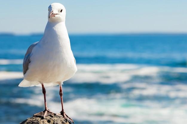 Милая белая чайка в естественной среде обитания