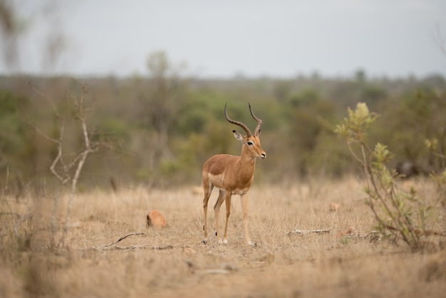 Симпатичный белохвостый олень в поле кустарников