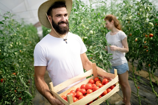 Cute woman and man in tomato plant at hothouse