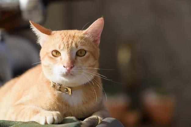 屋外に座っているかわいい黄色い猫