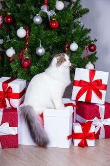 Симпатичный молодой британский кот с елкой и подарочными коробками