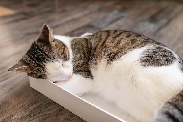 床の段ボール箱で眠っているかわいい若い国産二色ぶちと白猫