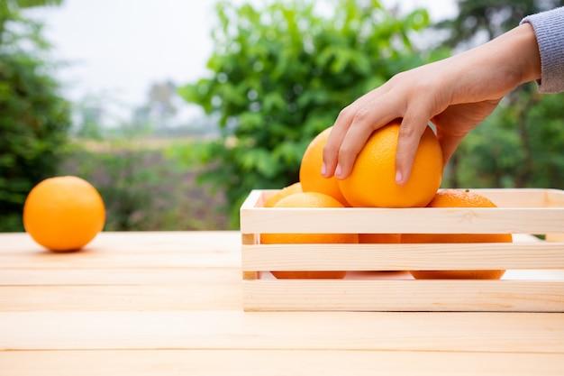 Милая молодая девушка держит апельсины в руке после выбора из сада. она увлекается садоводством и продажей продуктов.