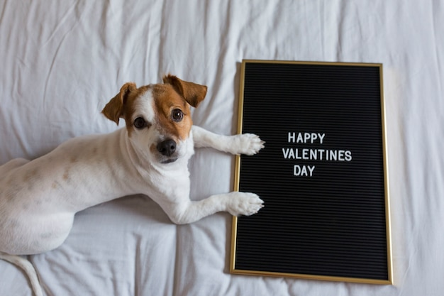 Cute young small dog sitting on bed with a blackboard with happy valentines day sign. concept. pets indoors