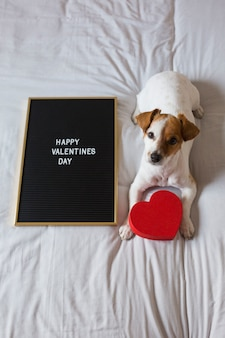 Cute young small dog sitting on bed with a red heart and a blackboard with happy valentines day sign. concept. pets indoors