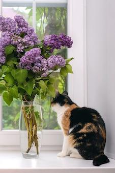 Симпатичный молодой трехцветный кот смотрит в окно рядом с букетом сирени в стеклянной вазе
