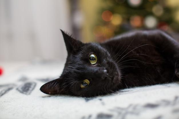 Кошка-милашка отдыхает на диване у себя дома