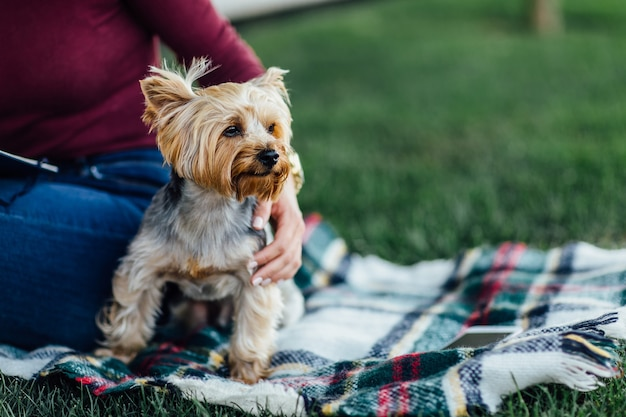 Cutte dog on the blanket, a small dog yorkshire terrier, sunlight, bright color saturation, unity with nature and pets. picnic time.