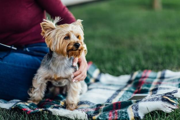 毛布に乗ったかわいい犬、小型犬のヨークシャーテリア、日光、明るい彩度、自然やペットとの一体感。ピクニックタイム。
