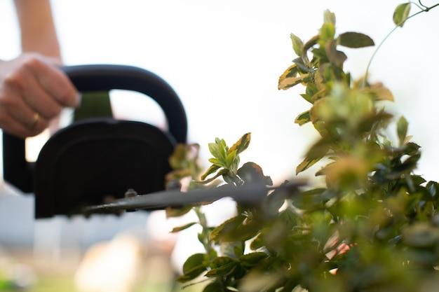 電気ヘッジトリマーでヘッジを切断します。セレクティブフォーカス。庭師は生垣またはトゥジャをトリミングしています。