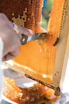 Cutting honey from the bee hive