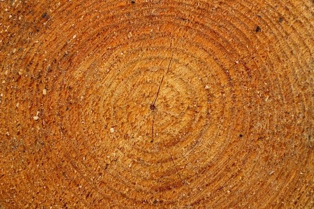 Обрезка дерева желтого цвета крупным планом