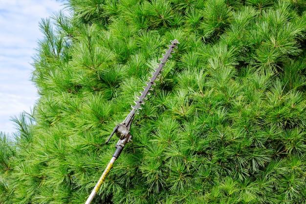 ポールチェーンソーで木の枝を切る