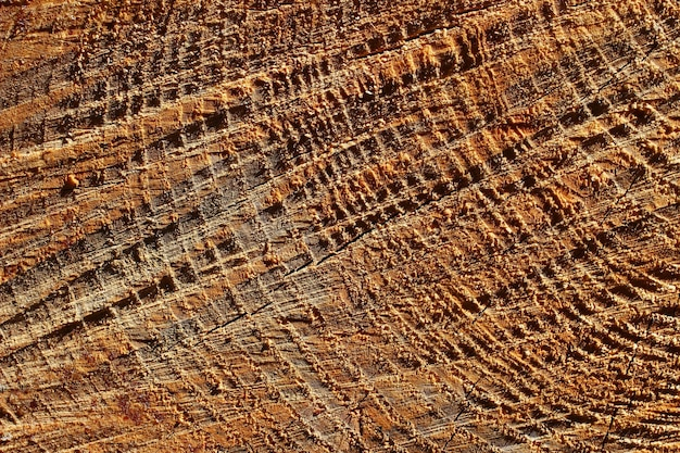 Cutting trunk of a tree close up