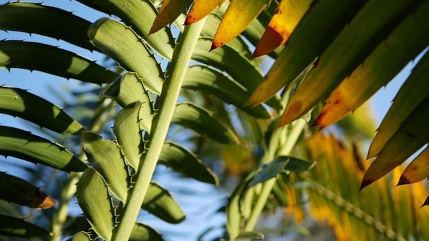 소철 고사리 숲 캘리포니아 미국 녹색 신선한 육즙 자연 식물 잎 encephalartos 또는 zamiaceae dioon 야자수 무성한 단풍 열대 정글 열대 우림 숲 분위기 정원 디자인에 나뭇잎