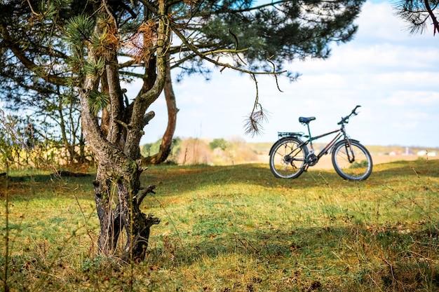 自然の中でサイクリング。古い松の近くの自転車